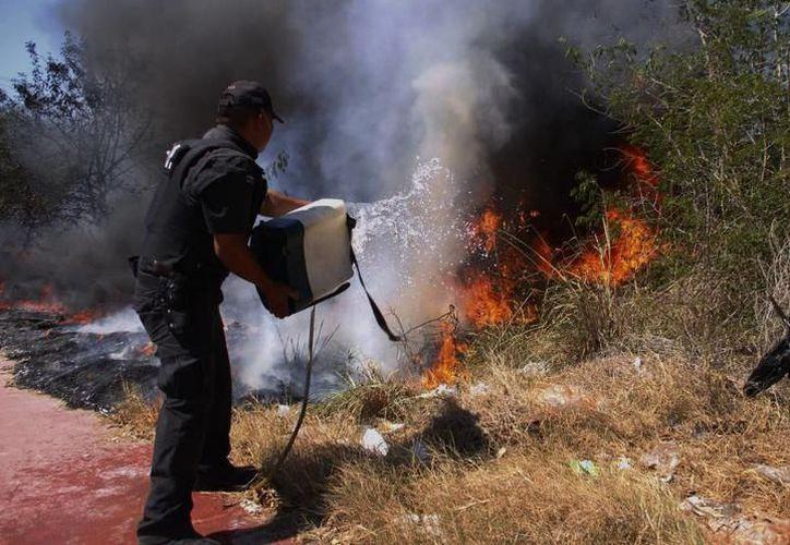 El intenso calor y los frentes fríos propician que la maleza se seque y sea un elemento idóneo para iniciar incendios. (SIPSE)