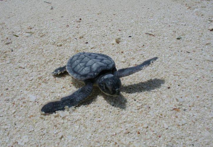En el Arrecife Alacranes también existe una importante variedad de especies marinas. (Cortesía)