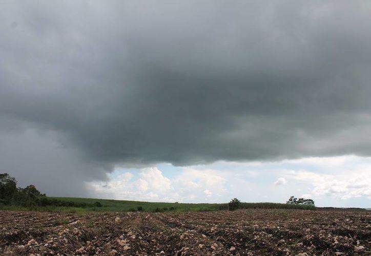 Lluvias resultan benéficas para productores cañeros. (Edgardo Rodríguez/SIPSE)