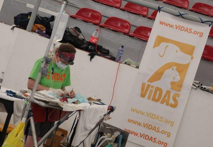 Durante el año la organización Vidas realizará otras campañas de esterilización de mascotas. (Adrián Barreto/SIPSE)