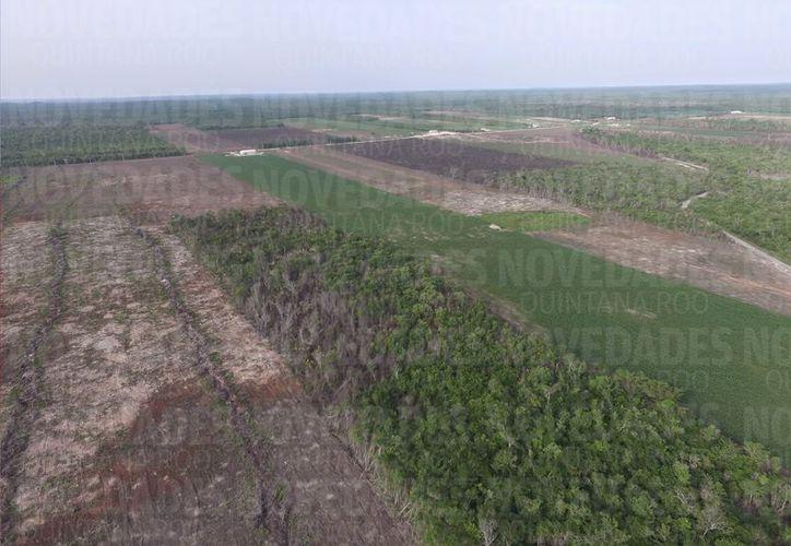La selva maya es un bloque de ecosistemas naturales relevante globalmente en procesos de adaptación y mitigación al cambio climático, el cual abarca 42 mil 300 kilómetros cuadrados. (Israel Leal/SIPSE)