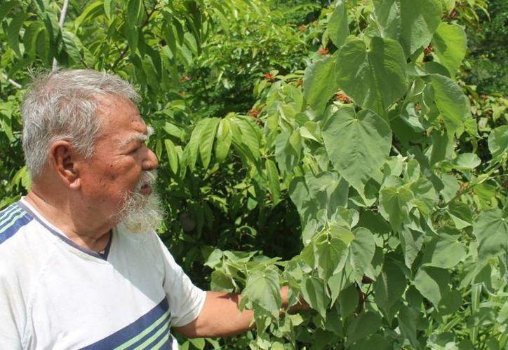Jesús Morales Rosas pretende hacer reflexionar que la naturaleza está por encima de los hombres. (Carlos Horta/SIPSE)