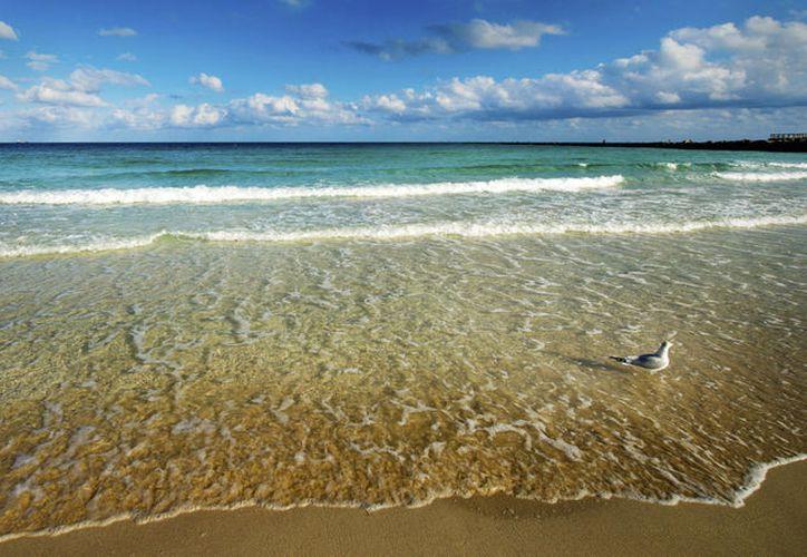 Su presencia en el mar te afecta directamente si tienes una herida reciente en la piel. (Foto: Univisión).