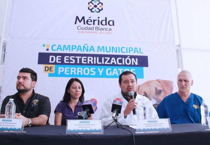En el marco de la Campaña Municipal de Esterilización de Perros y Gatos, el Ayuntamiento de Mérida ofrece 100 cirugías gratuitas para esterilizar mascotas. (Foto cortesía del Ayuntamiento de Mérida)