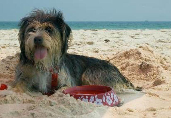 Procurar que la mascota se mantenga hidratada es una de las recomendaciones. (Contexto/Internet)