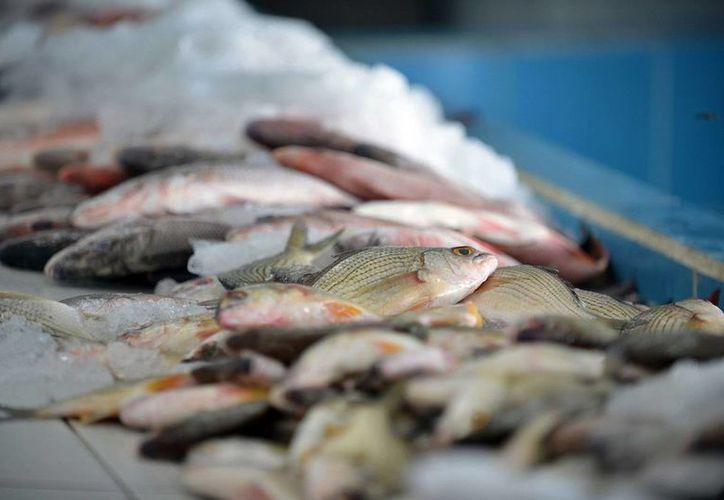 Se evitará que los productos del mar se vendan en mal estado. (Cortesía/SIPSE)