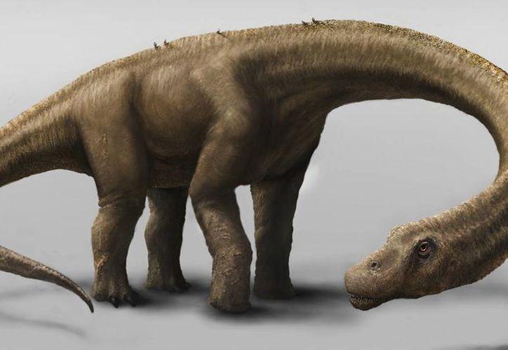 Reproducción artística realizada por el Museo Carnegie de Ciencias Naturales del Dreadnoughtus schrani. (Agencias/Carnegie Museum of Natural History, Mark A. Klingler)
