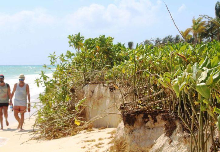 La vegetación no soportó las olas en la zona de playas de Playacar. (Octavio Martínez/SIPSE)