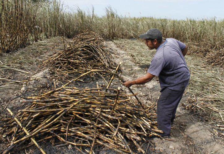 Se espera que arriben 800 trabajadores provenientes de los estados del Sureste mexicano. (Harold Alcocer/SIPSE)