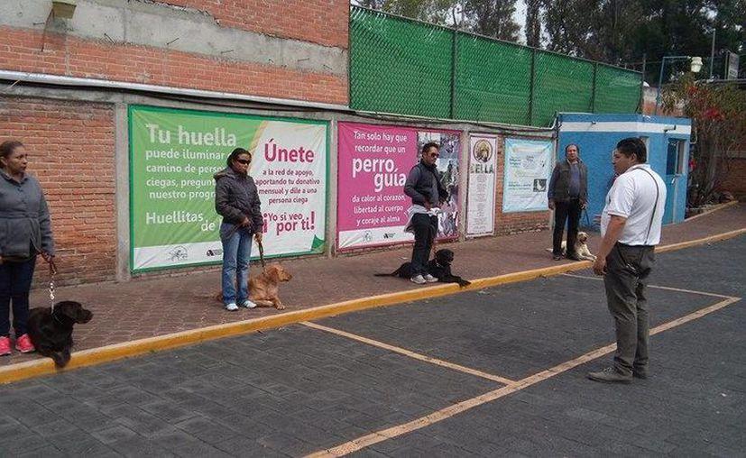 Antes de graduarse como guía, el perro es preparado durante dos años. (facebook.com/EscuelaparaEntrenamientodePerrosGuiaparaCiegos)