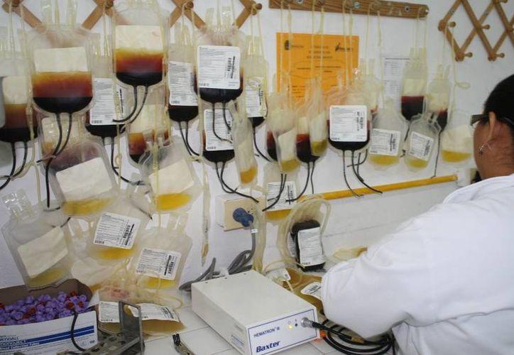 El año pasado el banco de la Sesa captó un total de cinco mil 200 unidades de sangre. (Archivo/SIPSE)