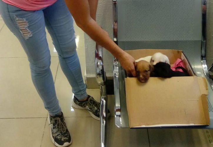 Los perritos que sobrevivieron fueron presentados ante las autoridades. (Eric Galindo/SIPSE)
