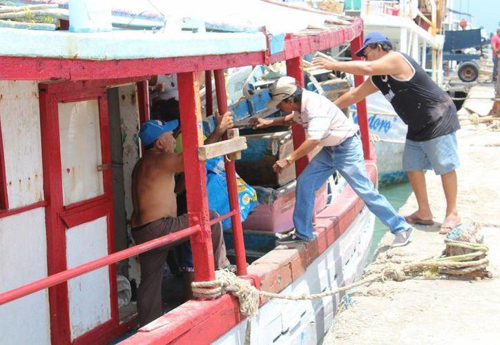 La temporada de captura de pulpo inicia en Yucatán este lunes 1 de agosto. (Foto de contexto de Milenio Novedades)