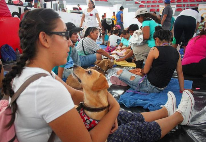 La campaña masiva de esterilización gratuita, a cargo de VIDAS, inició ayer en el poliforum  de Playa del Carmen. (Daniel Pacheco/SIPSE)