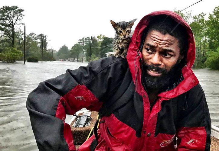 'Survivor' es un gatito que cabalgó sobre el hombro de su dueño tras huracán Florence, ha cautivado corazones en todo el mundo. (Vanguardia MX)