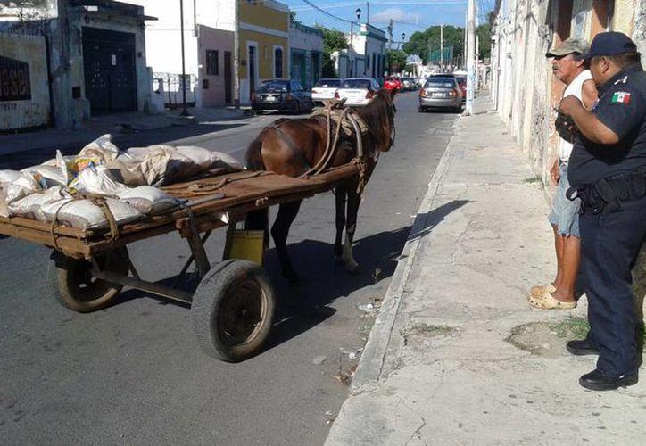 Los agentes de la Policía Municipal de Mérida aseguraron al caballo cerca de la Ermita. (Milenio Novedades)