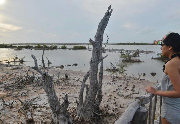 El proyecto del centro ecoturístico denominado Villas Xixim está en proceso de consulta pública, sin embargo, las autoridades desconocen dicha obra. (Gustavo Villegas/SIPSE)