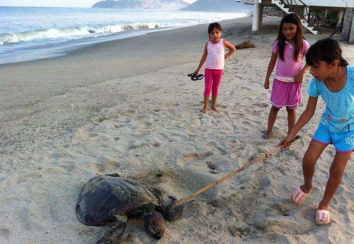 En México está prohibido comercializar huevos de tortuga. (Notimex)