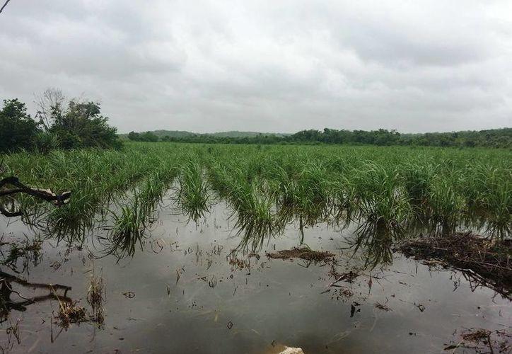 """Sagarpa beneficiará 32 mil hectáreas con el """"Apoyo Verde"""". (Edgardo Rodríguez/SIPSE)"""
