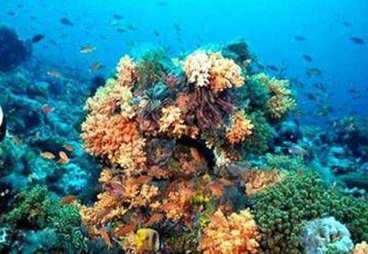 Las especies marinas previenen la erosión en las costas. (Archivo/SIPSE)