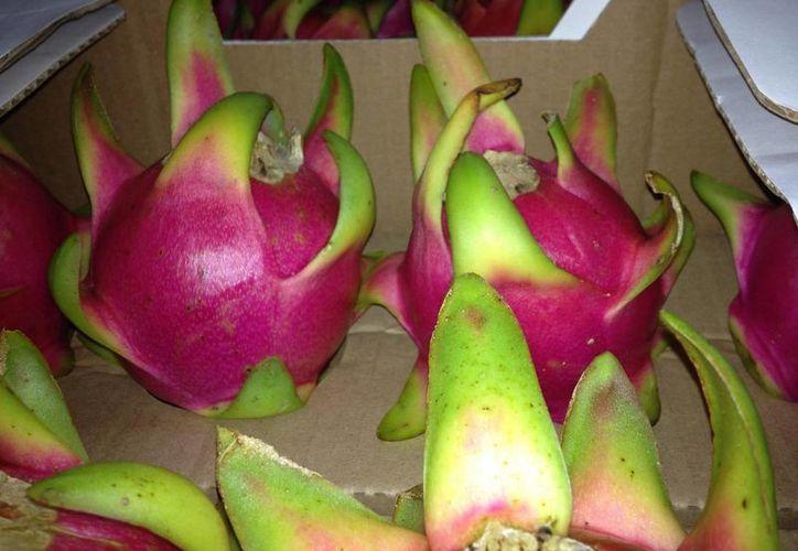 El representante de la Sedaru pidió paciencia a los productores de pitahaya. (Manuel Salazar/SIPSE)