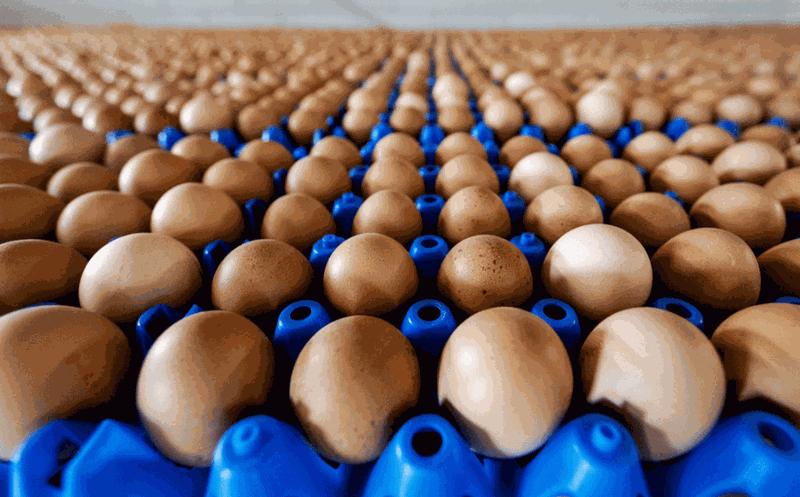 Crisis de huevos contaminados se expande por toda Europa