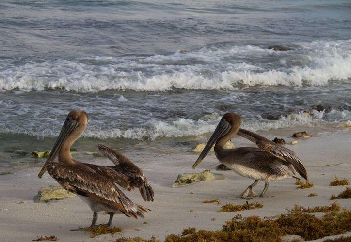 Algunas especies están amenazadas o en peligro de extinción. (Israel Leal/SIPSE)