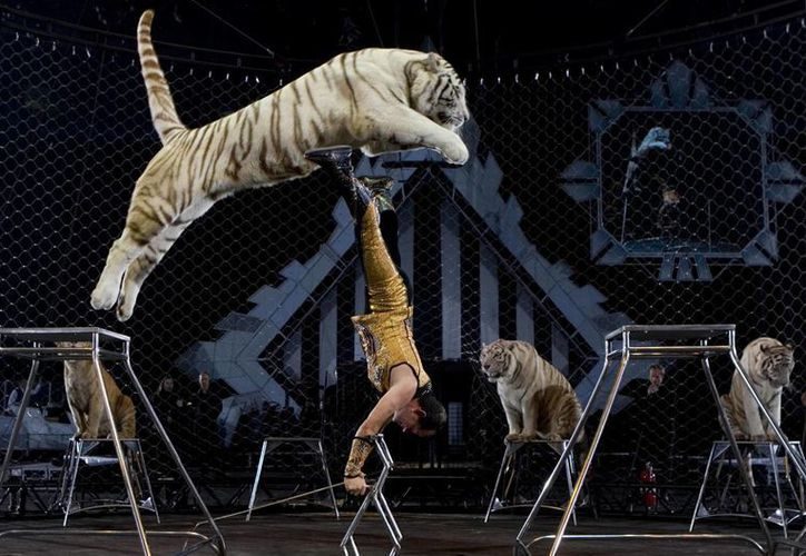 Los circos tendrán dos años para adaptarse a la nueva ley. (Agencias)