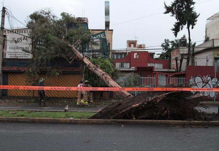 A consecuencia de los fuertes vientos, en las últimas semanas trombas en varias partes del país han ocasionado destrozos, como se aprecia en esta foto correspondiente al Distrito Federal . (Notimex)