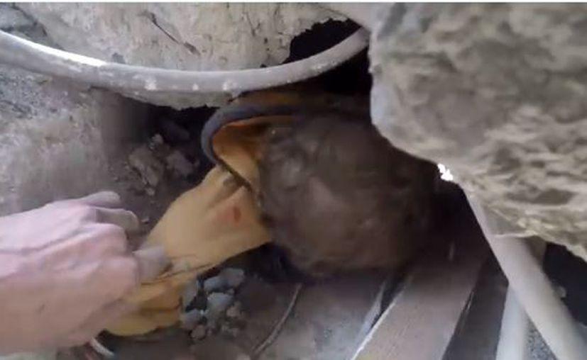 Tras se puesto a salvo, el bebé no paró de llorar por el susto. (Foto: Captura)