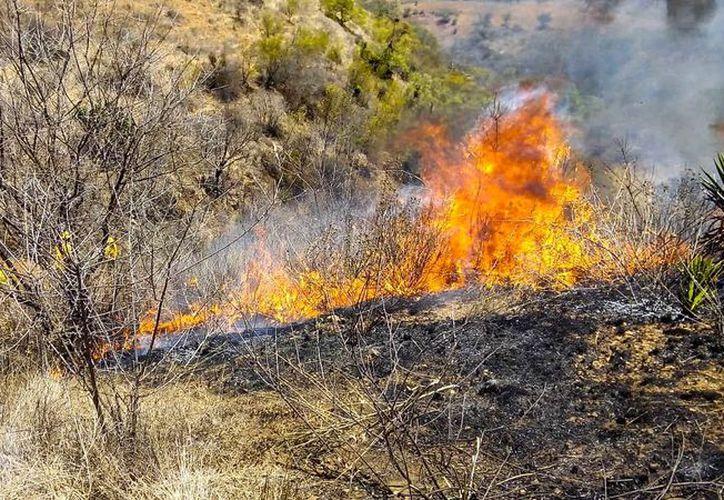 Solo este martes se han registrado cinco incendios simultáneos. (Foto: Twitter/@COESFO_GobOax)