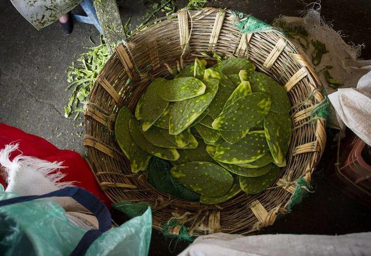 Producido desde tiempos prehispánicos y actualmente fuente casi inagotable de productos diversos, el nopal es hoy un detonante de desarrollo en zonas rurales de México. (Notimex)