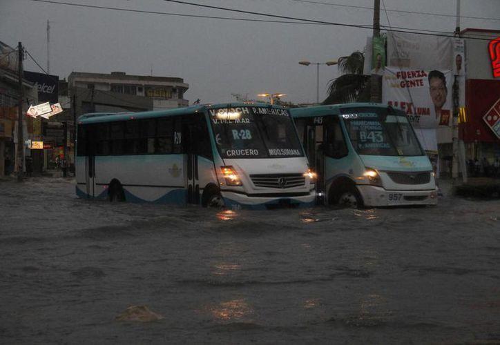 Las brigadas revisaron las avenidas Tulum, López Portillo, Torcasita, entre otras. (Israel Leal/SIPSE)