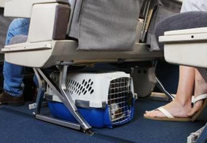 La línea aérea menciona que para viajar con este animalito, el viajero deberá ser mayor de edad y sólo podrá transportar un perro como máximo. (teleaire.com)
