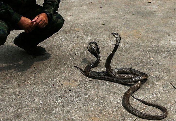 El hombre subía videos a la red con serpientes. (Athit Perawongmetha / Reuters)