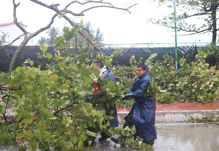 Los árboles que cayeron en la zona hotelera a la altura de Playa Langosta. (Redacción/SIPSE)