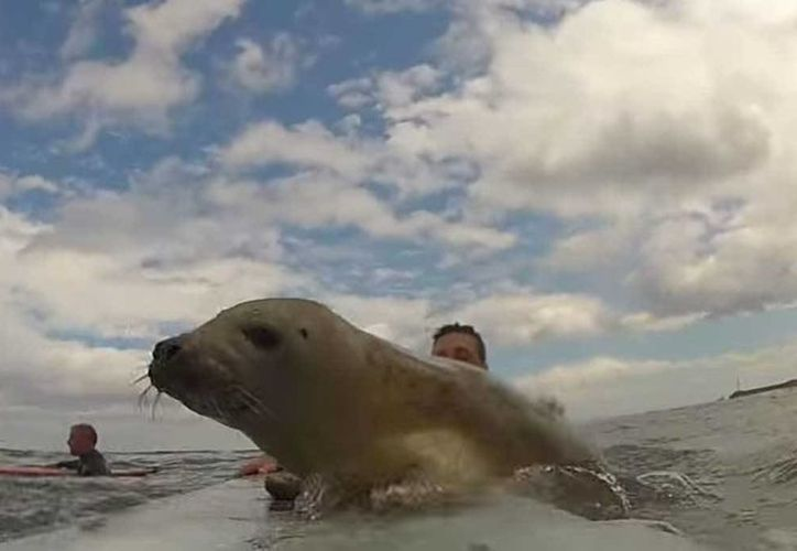 El momento captado por la cámara tiene más de 300 mil reproducciones. (Foto: Matthew Stanley/Youtube)