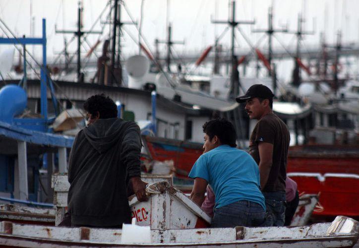 """Los pescadores de Progreso denuncian que, a pesar de la veda del mero, todavía """"circula"""" producto fresco en el puerto.  La imagen es de contexto. (SIPSE)"""
