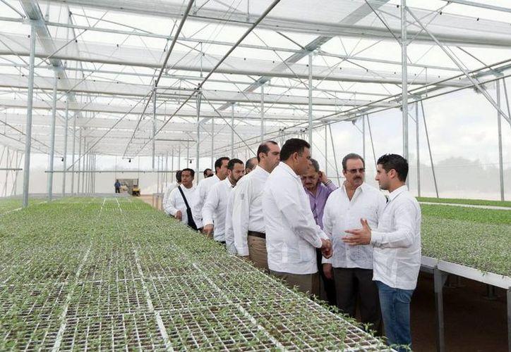 El Tecnoparque Agrícola, ubicado en Tixkokob,  cuenta con sistemas tecnificados de riego e infraestructura, además de buenas prácticas de producción de nivel de exportación. En el lugar ofrecieron una explicación al Gobernador y sus acompañantes. (Milenio Novedades)