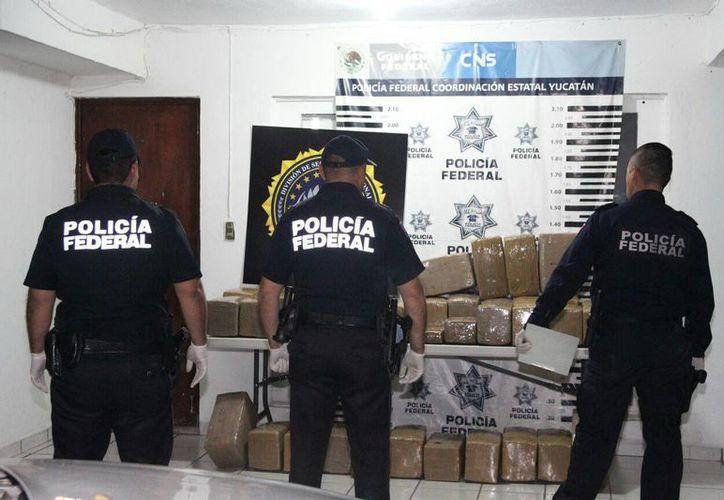 En operativo federal se logró el decomiso de más de 350 kilogramos de marihuana en Mérida. (Martín González/SIPSE)