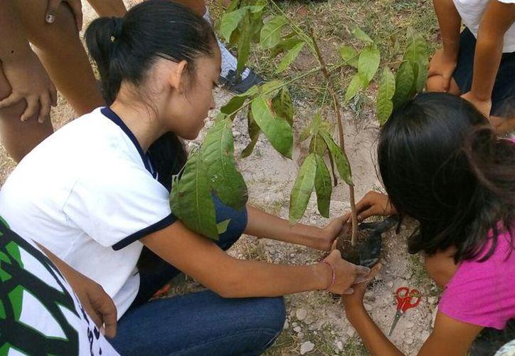 Plant for the Planet es un movimiento global con la meta de plantar árboles en todo el mundo para combatir el cambio climático. (Ángel Castilla/SIPSE)