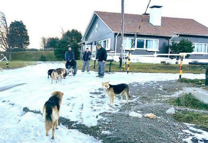 Una mujer fue atacada por una jauría recientemente en Tierra de Fuego, Argentina. (La Nación)