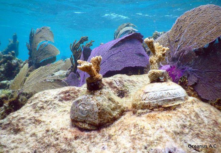 La salud de los ecosistemas marinos de la Reserva de la Biosfera de Banco Chinchorro forma parte del Sistema Arrecifal Mesoamericano. (Archivo/SIPSE)