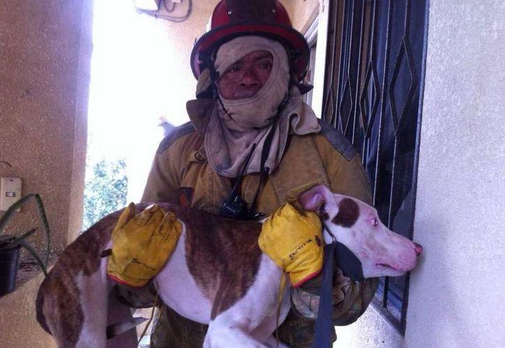 Con el perro en brazos, el bombero salió de la casa. (Redacción/SIPSE)