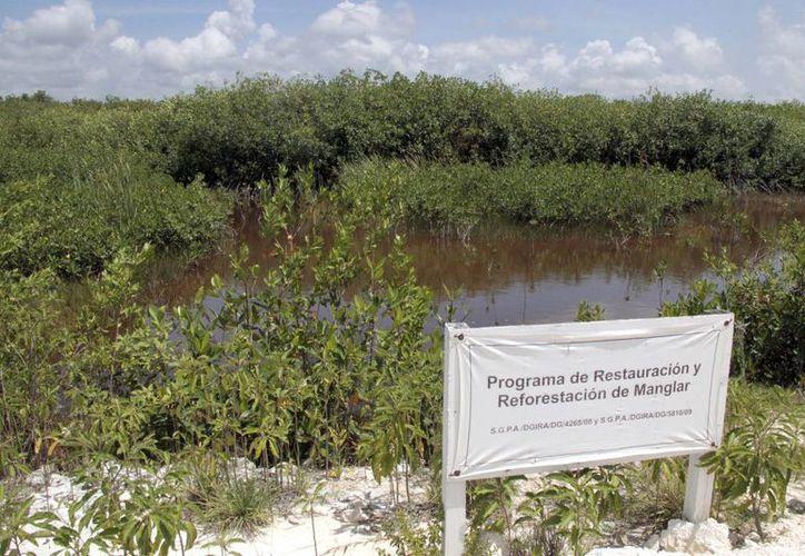 Protegerán los recursos naturales de la entidad. (Tomás Álvarez/SIPSE)