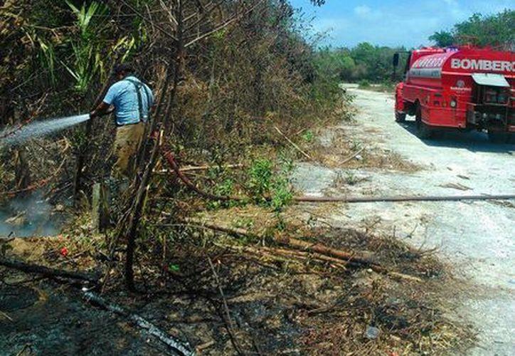 Los incendios, así como las construcciones reducen el hábitat de la fauna local.  (Daniel Pacheco/SIPSE)