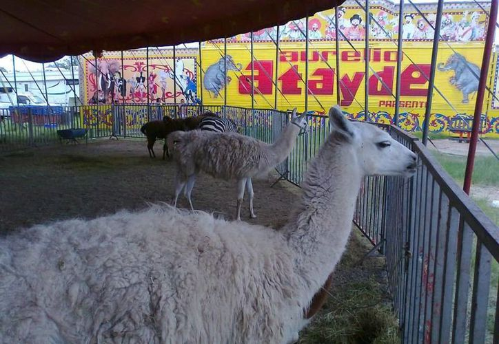 La prohibición del uso de animales en circos estará vigente a partir del 6 de octubre. (facebook.com/pages/Circo-SIN-Animales)