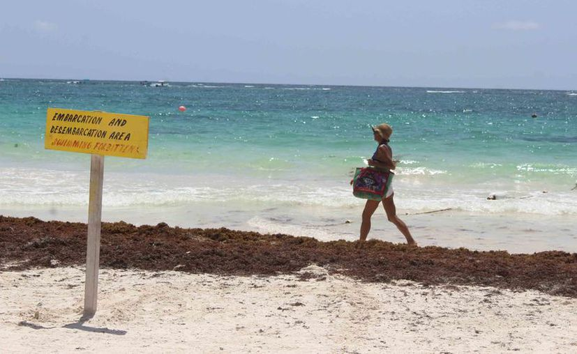 El alga es concentrada en zonas del litoral que no es utilizado, con la finalidad de que favorezca la duna. (Sara Cahuich/SIPSE)