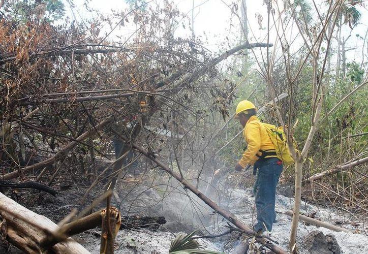 La Conafor prepara 430 brigadistas comunitarios y 150 especialistas para combatir los incendios. (Harold Alcocer/SIPSE)