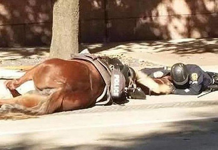 Tras sufrir un accidente, la yegua se quedó postrada en el asfalto, y el agente  D. Herrejon la abrazó hasta que murió el equino. (Houston Police Department)